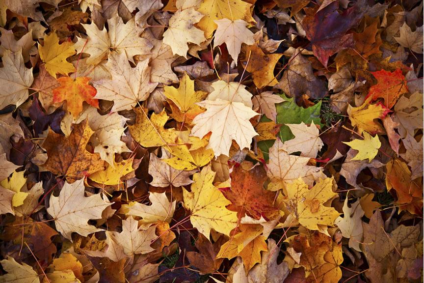 Nodes 25 - Razones por las que comprar una autocaravana en otoño